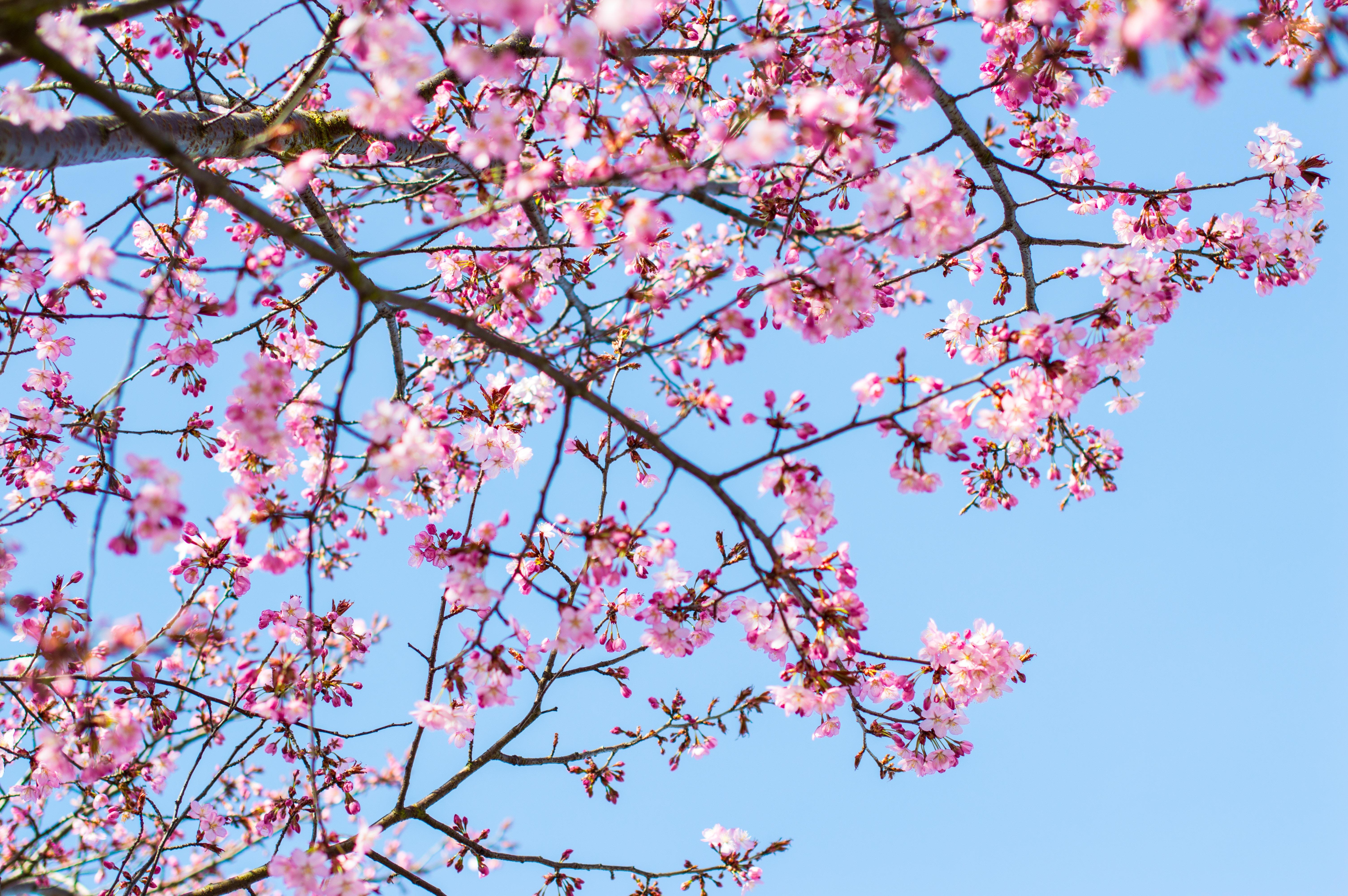 bloemen bloesem